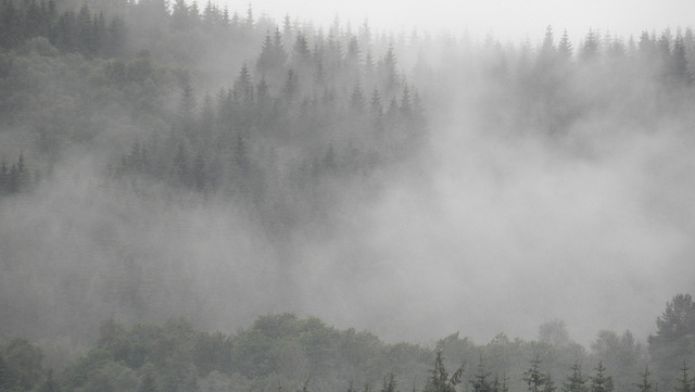 Fog over the Forest: How do the land and atmosphere affect one another? We all know that humans...