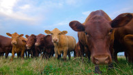 A group of scientists at Oxford University have created the world's first cow that can produce chocolate milk. The study, published in Nature Genetics, is […]