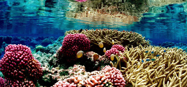 Coral Collapse:Could our world's mostwondrous marine environments be about to melt away? We have all heard about the dangers […]