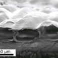 In recent years the field of artificial muscle technology has been rapidly expanding and advancing. This week researchers at the National Taiwan University have revealed […]