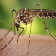 This week the World Health Organisation has convened an emergency meeting to discuss measures that can be taken against the Zika virus, which is becoming […]